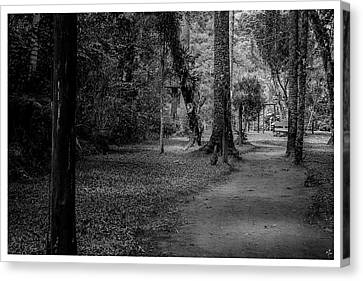 Bosque Do Silencio-campos Do Jordao-sp Canvas Print