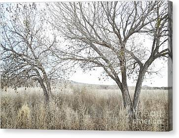 Canvas Print featuring the photograph Bosque Dreamy Tree Field by Andrea Hazel Ihlefeld