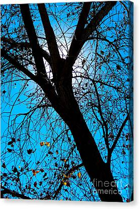 Bosque Silhouette Canvas Print
