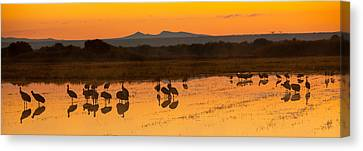 Bosque Sunrise Canvas Print