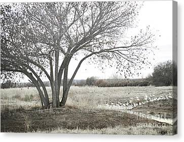 Canvas Print featuring the photograph Bosque Tree Snow Geese by Andrea Hazel Ihlefeld