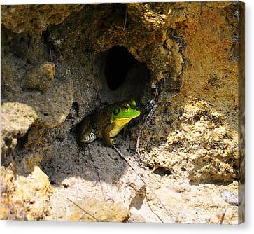Canvas Print featuring the photograph Boss Frog by Al Powell Photography USA