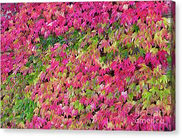 Boston Ivy In Autumn Canvas Print by Tim Gainey