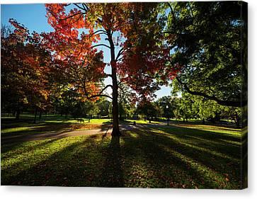 Boston Public Garden Autumn Tree Morning Light Canvas Print by Toby McGuire