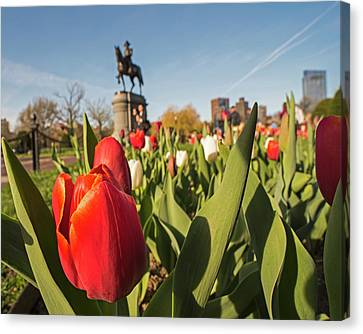 Boston Public Garden Tulips And George Washington Statue 2 Canvas Print by Toby McGuire