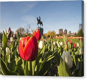 Boston Public Garden Tulips And George Washington Statue Canvas Print by Toby McGuire