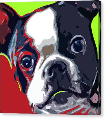 Boston Pup Canvas Print