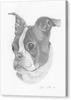 Boston Terrier Juno Canvas Print