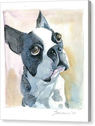 Boston Terrier Canvas Print by Mike Lawrence