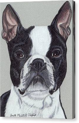 Boston Terrier Vignette Canvas Print