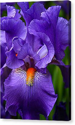 Botanical Beauty In Purple Canvas Print by Toma Caul