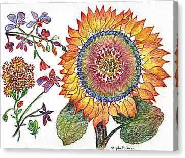 Botanical Flower-46 Sunflower Drawing Canvas Print by Julie Richman