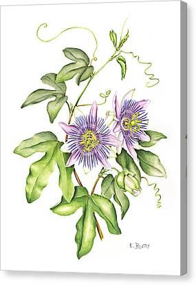 Passiflora Canvas Print - Botanical Illustration Passion Flower by Karla Beatty