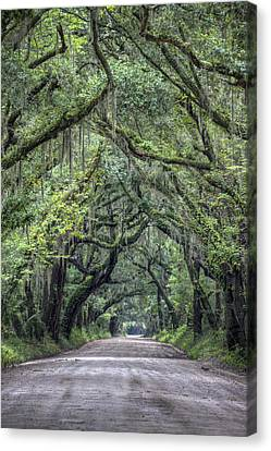 Botany Bay Country Road Canvas Print by Dustin K Ryan