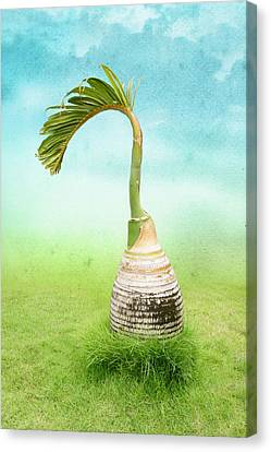 Bottle Palm Tree Canvas Print by Art Spectrum