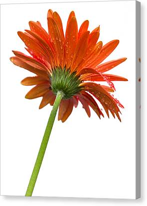 Flowerrs Canvas Print - Bottom Sprout by Denis Lemay