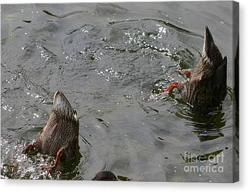 Canvas Print featuring the photograph Bottoms Up by David Bishop