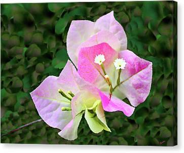 Bougainvillea Blossoms Canvas Print by Kristin Elmquist