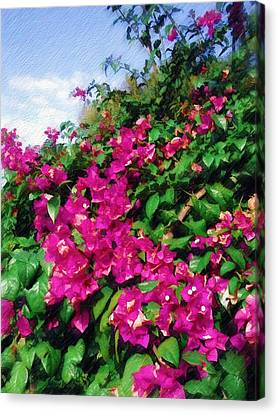 Canvas Print featuring the photograph Bougainvillea by Sandy MacGowan