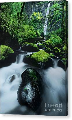 Canvas Print featuring the photograph Boulder Elowah Falls Columbia River Gorge Nsa Oregon by Dave Welling