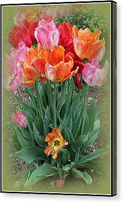 Bouquet Of Colorful Tulips Canvas Print by Dora Sofia Caputo Photographic Art and Design