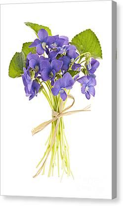 Bouquet Of Violets Canvas Print by Elena Elisseeva