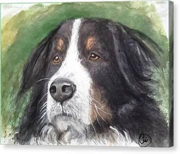 Bouvier Bernois Canvas Print by Annie Poitras