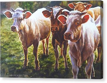 Bovine Curiosity Canvas Print by Marion  Hylton