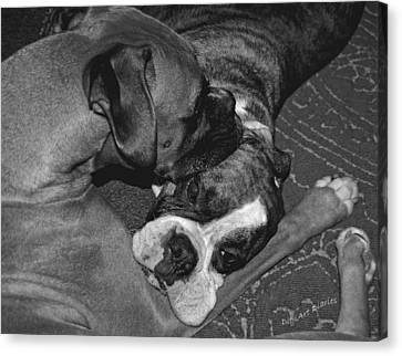 Boxer Buddies Canvas Print by DigiArt Diaries by Vicky B Fuller