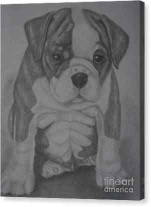 Boxer Puppy Canvas Print by Ian Lennox