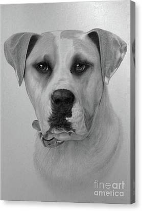 Boxer. Canvas Print by Wayne Evans