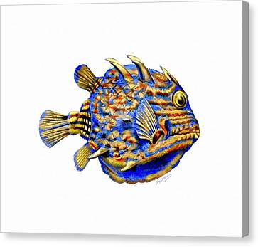 Boxfish II Canvas Print
