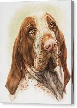 Bracco Italiano Canvas Print by Barbara Keith