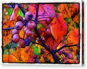 Bradford Pear In Autumn Canvas Print