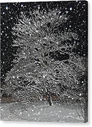 Wind Blown Tree Canvas Print - Bradford Pear by Patricia Motley