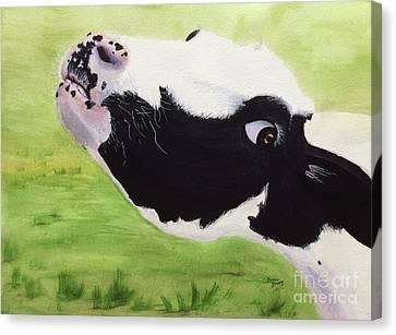 Brady Canvas Print by Bonnie Young