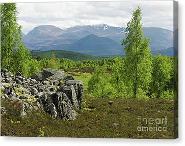 Braeriach From Granish - Cairngorm Mountains Canvas Print by Phil Banks