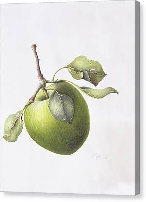 Bramley Apple Canvas Print by Margaret Ann Eden