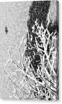 Branch In Lake Ice With Snow Black And White  Canvas Print by Randy Steele