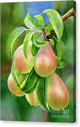 Branch Of Bronze Pears Canvas Print