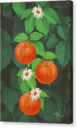 Branch Of Mandarin Orange Canvas Print by Angeles M Pomata