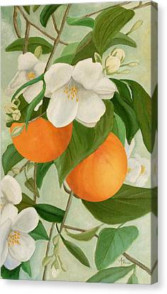 Branch Of Orange Tree In Bloom Canvas Print by Angeles M Pomata