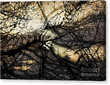 Branches Illuminated By Bright Sunshine, Double Exposed Image Canvas Print
