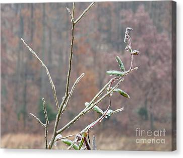 Branches In Ice Canvas Print by Craig Walters