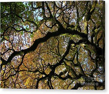 Branches - Light And Shadow Canvas Print