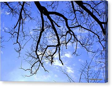 Branches Canvas Print by Lois Lepisto