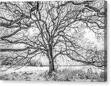 Branches Of Life Canvas Print by David Letts
