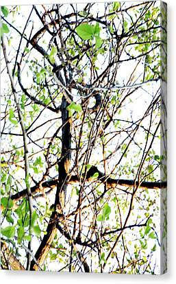 Canvas Print - Branches by Ross Odom