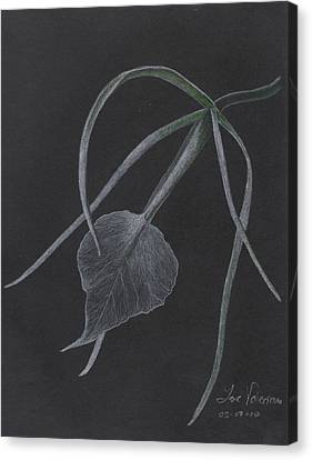 Brassalove Nordosa Orchid Canvas Print