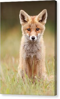 Brave New Fox Kit Canvas Print by Roeselien Raimond